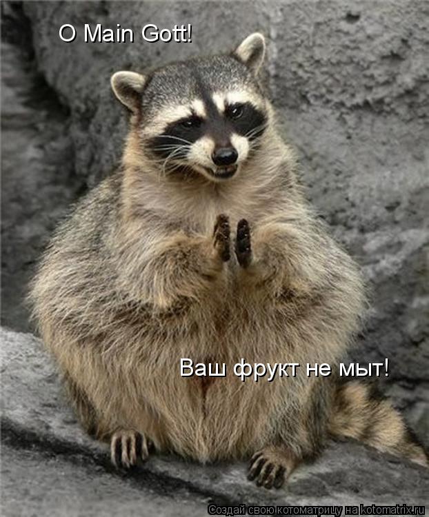Котоматрица: O Main Gott! O Main Gott! Ваш фрукт не мыт!