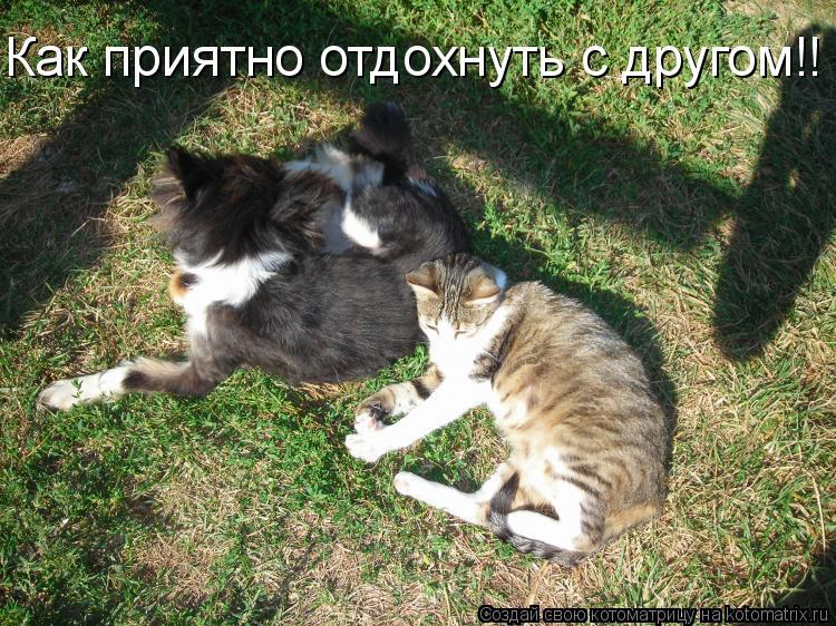Котоматрица: Как приятно отдохнуть с другом!!