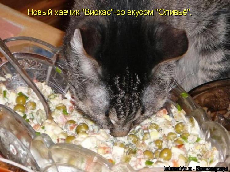"Котоматрица: Новый хавчик ""Вискас""-со вкусом ""Оливьё""."