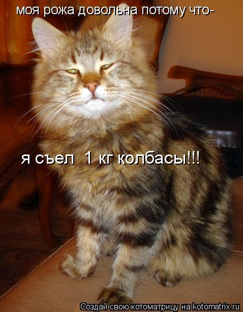 Котоматрица: моя рожа довольна потому что- я съел  1 кг колбасы!!!