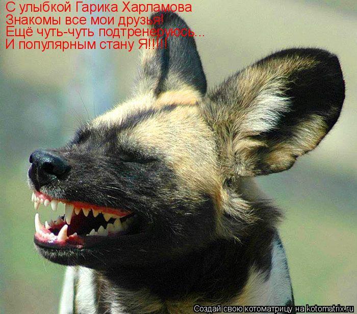 Котоматрица: С улыбкой Гарика Харламова Знакомы все мои друзья! Ещё чуть-чуть подтренеруюсь... И популярным стану Я!!!!!