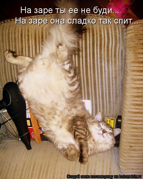 Котоматрица: На заре ты ее не буди... На заре она сладко так спит...