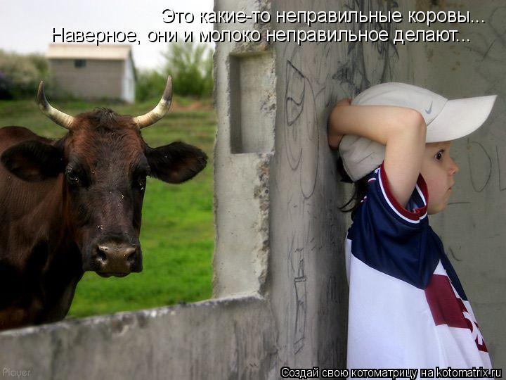 Котоматрица: Это какие-то неправильные коровы... Наверное, они и молоко неправильное делают...