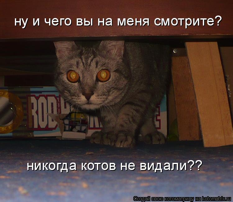 Котоматрица: ну и чего вы на меня смотрите? никогда котов не видали??