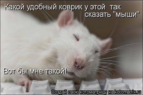 """Котоматрица: Какой удобный коврик у этой  так  сказать """"мыши"""" Вот бы мне такой!"""