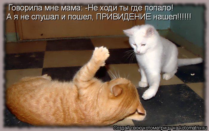 Котоматрица: Говорила мне мама: -Не ходи ты где попало! А я не слушал и пошел, ПРИВИДЕНИЕ нашел!!!!!!