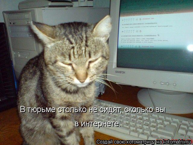 Котоматрица: В тюрьме столько не сидят, сколько вы в интернете.