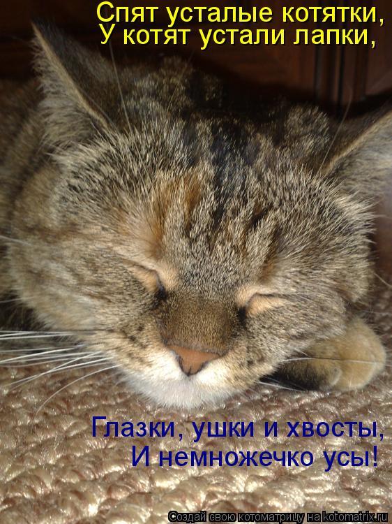 Котоматрица: Спят усталые котятки, У котят устали лапки, Глазки, ушки и хвосты, И немножечко усы!