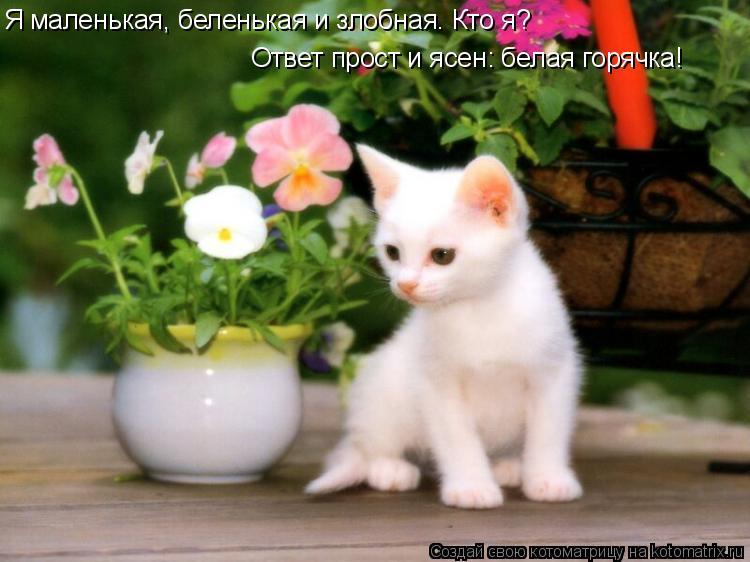 Котоматрица: Я маленькая, беленькая и злобная. Кто я? Ответ прост и ясен: белая горячка!