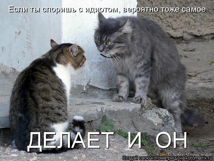 Котоматрица: Если ты споришь с идиотом, вероятно тоже самое  ДЕЛАЕТ  И  ОН