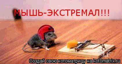 Котоматрица: МЫШЬ-ЭКСТРЕМАЛ!!!
