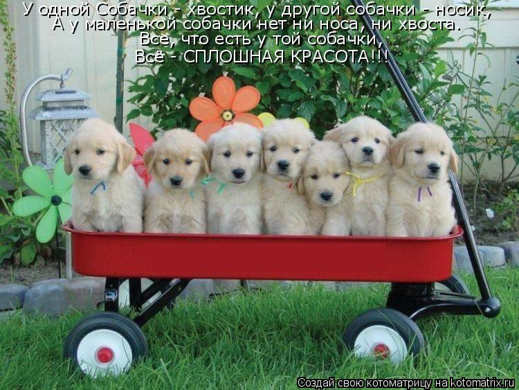 Котоматрица: У одной Собачки - хвостик, у другой собачки - носик, А у маленькой собачки нет ни носа, ни хвоста. Все, что есть у той собачки, Всё - СПЛОШНАЯ КРА