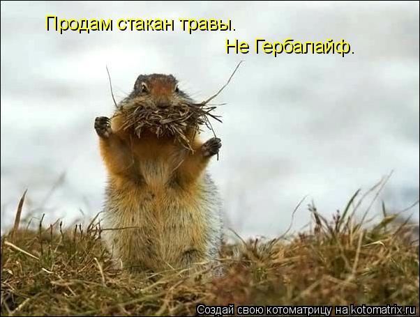 Котоматрица: Продам стакан травы. Не Гербалайф.