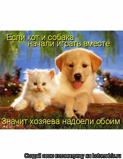 Котоматрица: Если кот и собака начали играть вместе Значит хозяева надоели обоим