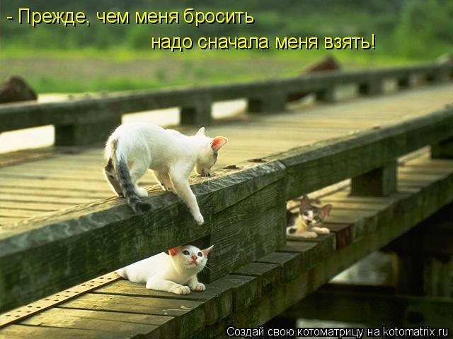 Котоматрица: - Прежде, чем меня бросить надо сначала меня взять!
