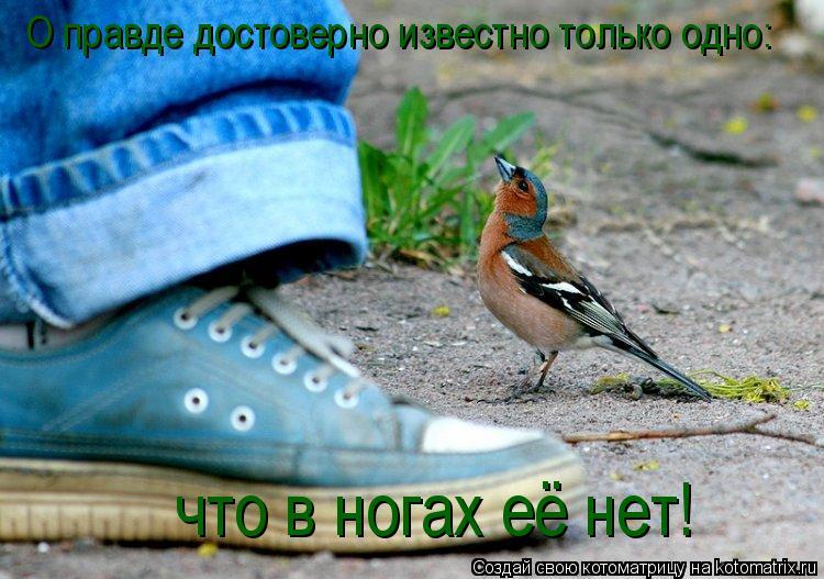 Котоматрица: О правде достоверно известно только одно: что в ногах её нет!