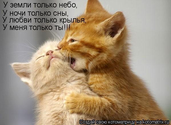 Котоматрица: У земли только небо, У ночи только сны, У любви только крылья, У меня только ты!!!