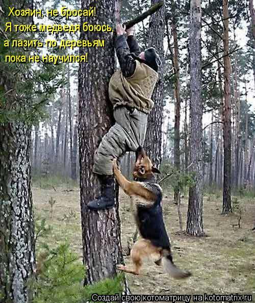 Котоматрица: Хозяин, не бросай! Я тоже медведя боюсь, а лазить по деревьям пока не научился!