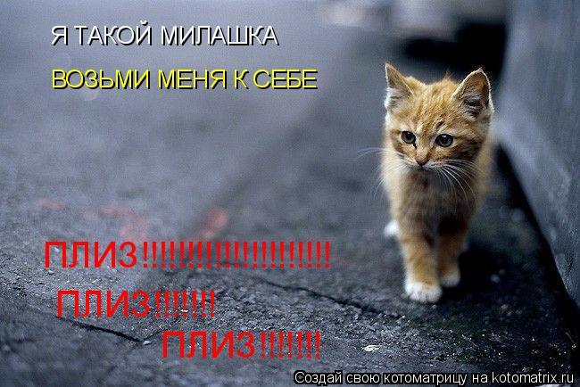Котоматрица: Я ТАКОЙ МИЛАШКА ВОЗЬМИ МЕНЯ К СЕБЕ ПЛИЗ!!!!!!!!!!!!!!!!!!!!! ПЛИЗ!!!!!!! ПЛИЗ!!!!!!!