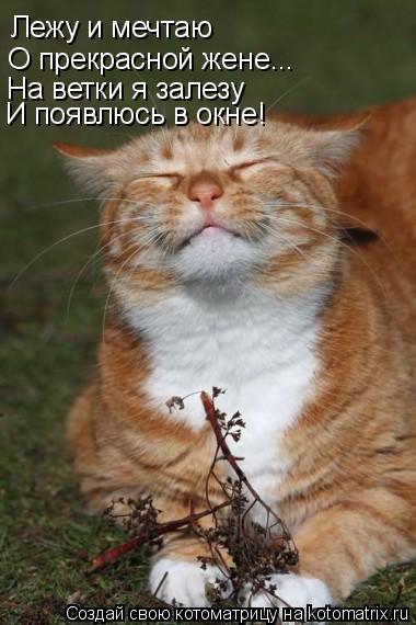 Котоматрица: Лежу и мечтаю  О прекрасной жене... На ветки я залезу И появлюсь в окне!