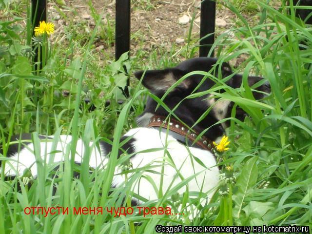 Котоматрица: отпусти меня чудо трава....
