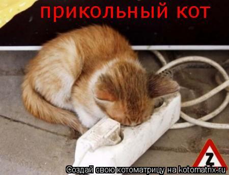 Котоматрица: прикольный кот