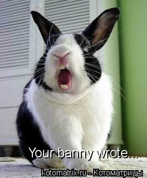 Котоматрица: Your banny wrote...