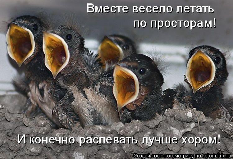 Котоматрица: Вместе весело летать по просторам! И конечно распевать лучше хором!