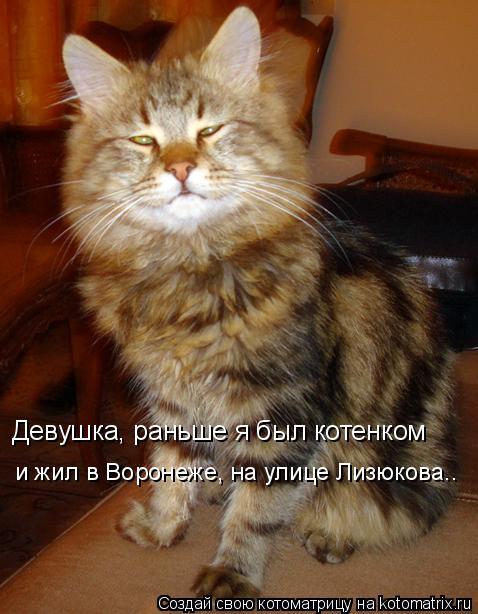 Котоматрица: Девушка, раньше я был котенком  и жил в Воронеже, на улице Лизюкова..
