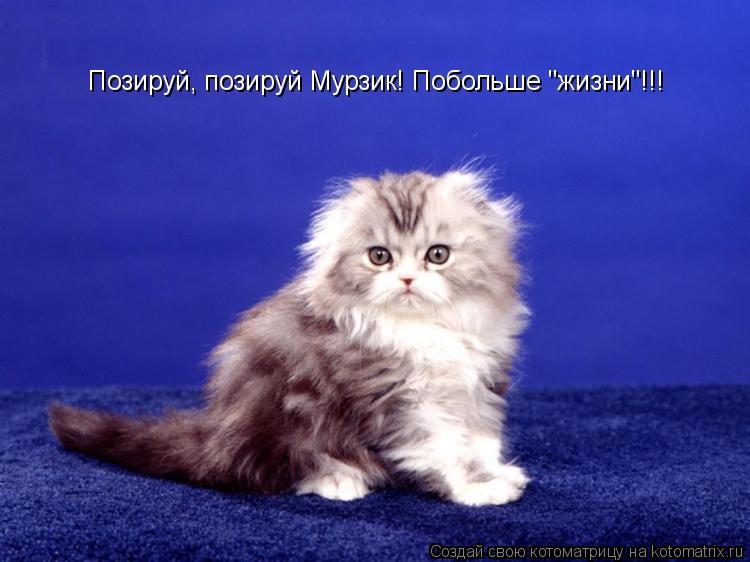 """Котоматрица: Позируй, позируй Мурзик! Побольше """"жизни""""!!!"""