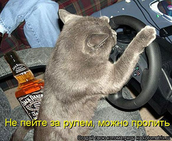 Котоматрица: Не пейте за рулем, можно пролить