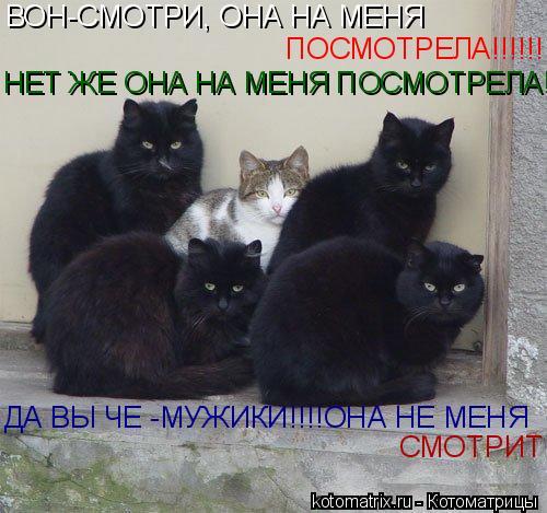 Котоматрица: ВОН-СМОТРИ, ОНА НА МЕНЯ  ПОСМОТРЕЛА!!!!!! НЕТ ЖЕ ОНА НА МЕНЯ ПОСМОТРЕЛА! ДА ВЫ ЧЕ -МУЖИКИ!!!!ОНА НЕ МЕНЯ  СМОТРИТ