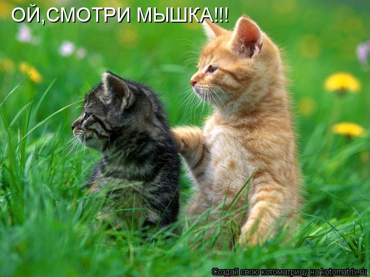 Котоматрица: ОЙ,СМОТРИ МЫШКА!!!