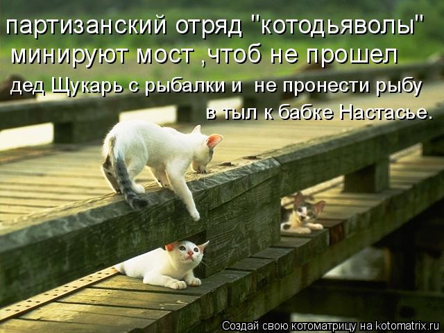 """Котоматрица: партизанский отряд """"котодьяволы"""" минируют мост ,чтоб не прошел дед Щукарь с рыбалки и  не пронести рыбу в тыл к бабке Настасье."""