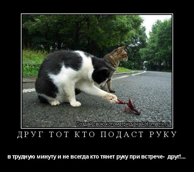 Котоматрица: Друг тот кто подаст руку в трудную минуту и не всегда кто тянет руку при встрече-  друг!...