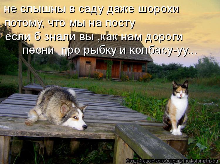 Котоматрица: не слышны в саду даже шорохи потому, что мы на посту если б знали вы ,как нам дороги песни  про рыбку и колбасу-уу...