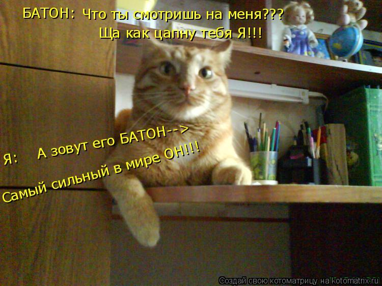 Котоматрица: Что ты смотришь на меня??? Ща как цапну тебя Я!!! Самый сильный в мире ОН!!! БАТОН: Я:    А зовут его БАТОН-->
