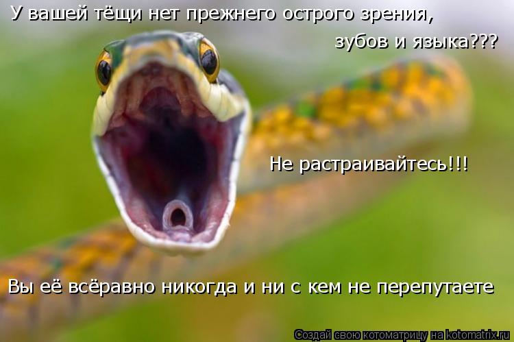 Котоматрица: У вашей тёщи нет прежнего острого зрения, зубов и языка??? Вы её всёравно никогда и ни с кем не перепутаете Не растраивайтесь!!!