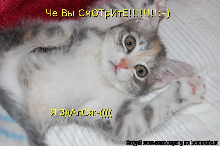 Котоматрица: Че Вы СмОТрИтЕ!!!!!!!!:-) Я ЗдАлСя:-((((