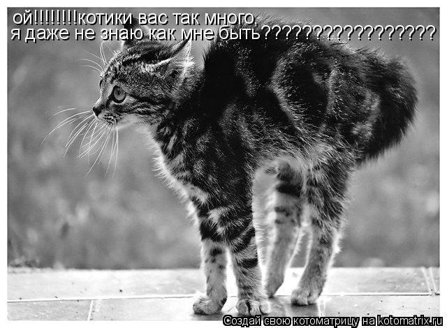 Котоматрица: ой!!!!!!!!котики вас так много, я даже не знаю как мне быть?????????????????