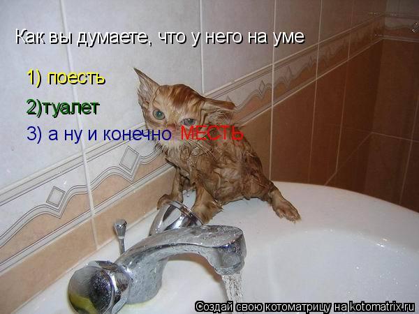 Котоматрица: Как вы думаете, что у него на уме 2)туалет 3) а ну и конечно  1) поесть МЕСТЬ