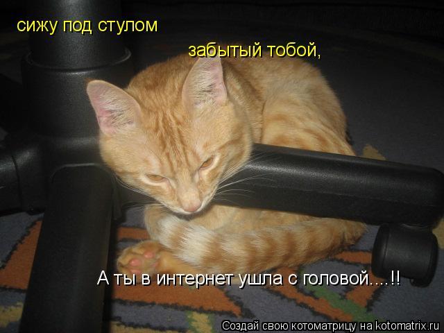 Котоматрица: сижу под стулом забытый тобой, А ты в интернет ушла с головой....!!