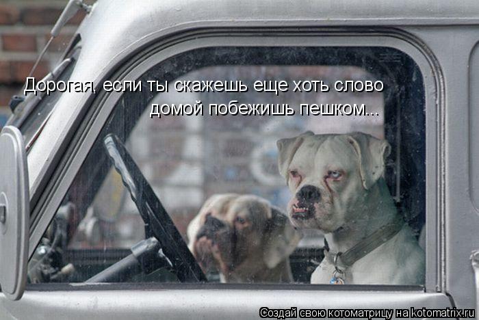Котоматрица: Дорогая, если ты скажешь еще хоть слово домой побежишь пешком...