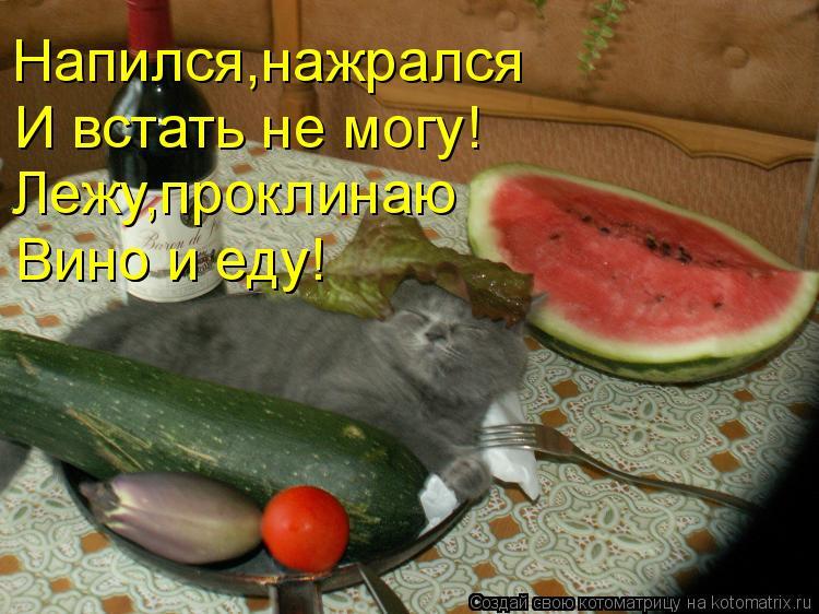 Котоматрица: Напился,нажрался И встать не могу! Лежу,проклинаю Вино и еду! Вино и еду!