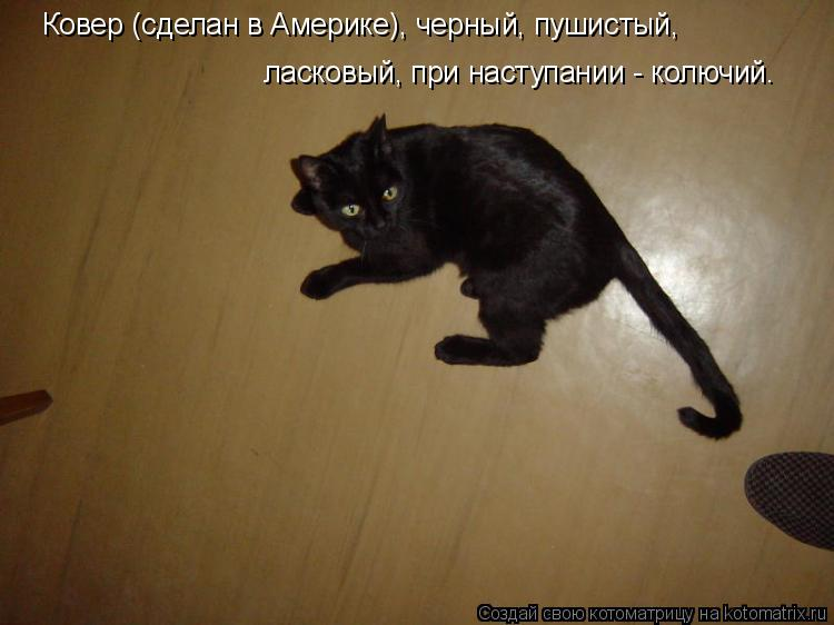 Котоматрица: Ковер (сделан в Америке), черный, пушистый, ласковый, при наступании - колючий.