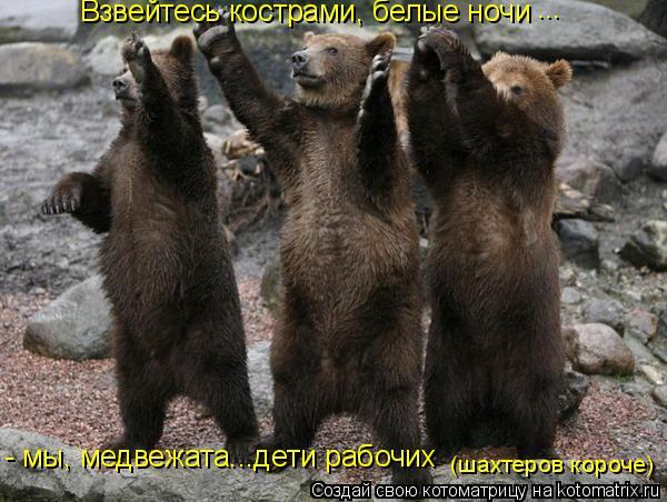 Котоматрица: Взвейтесь кострами, белые ночи ... - мы, медвежата...дети рабочих  (шахтеров короче)