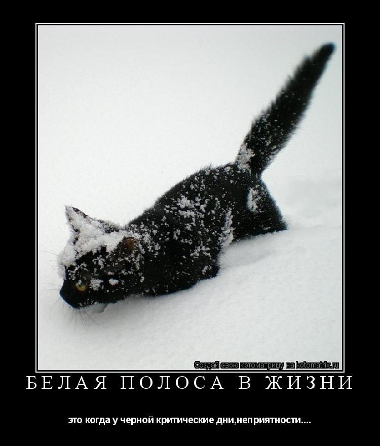 Котоматрица: Белая полоса в жизни это когда у черной критические дни,неприятности....