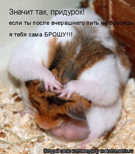 Котоматрица: Значит так, придурок! если ты после вчерашнего пить не бросишь, я тебя сама БРОШУ!!!