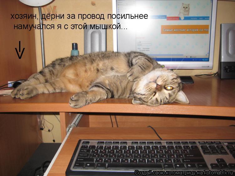Котоматрица: хозяин, дёрни за провод посильнее намучался я с этой мышкой... I V