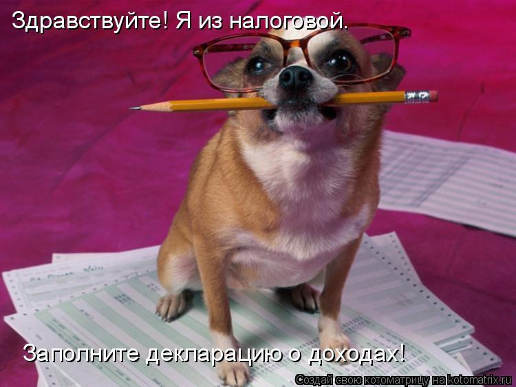 Котоматрица: Здравствуйте! Я из налоговой. Заполните декларацию о доходах!